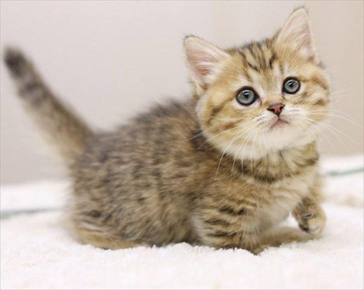 かわいい猫3