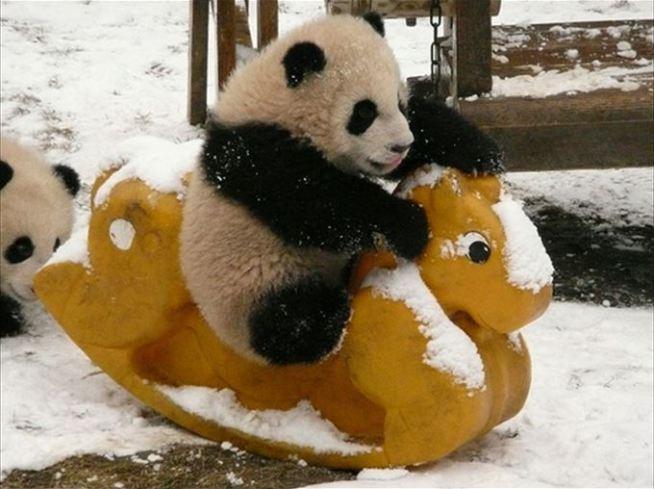 いい子いい子するパンダ
