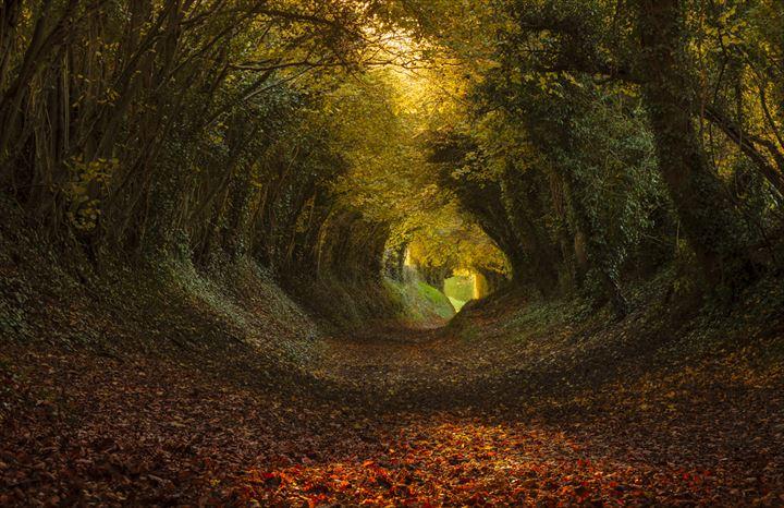 美しいトンネル 9