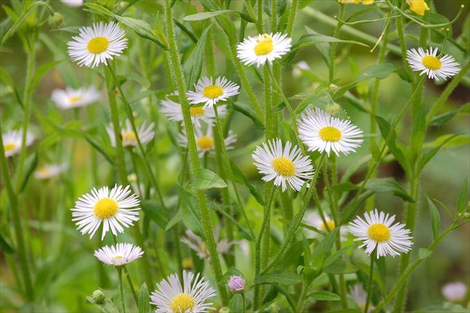 美しい花と花言葉 79
