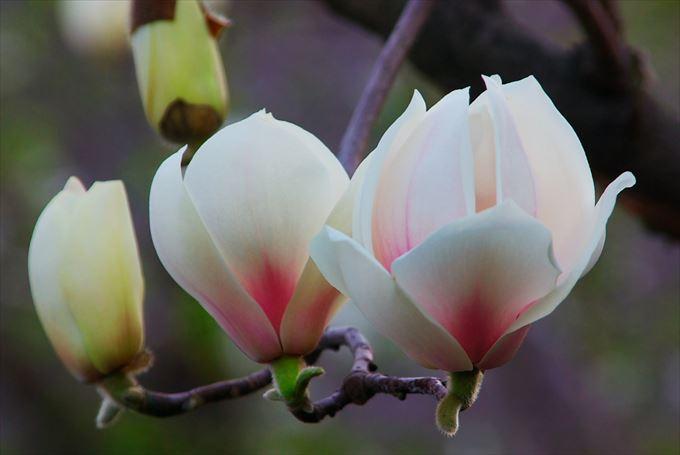 美しい花と花言葉 88