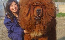 世界一の巨大生物・動物まとめ(画像)
