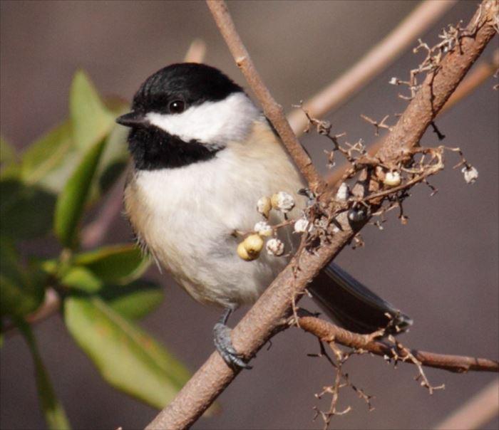 かわいい鳥 1.3
