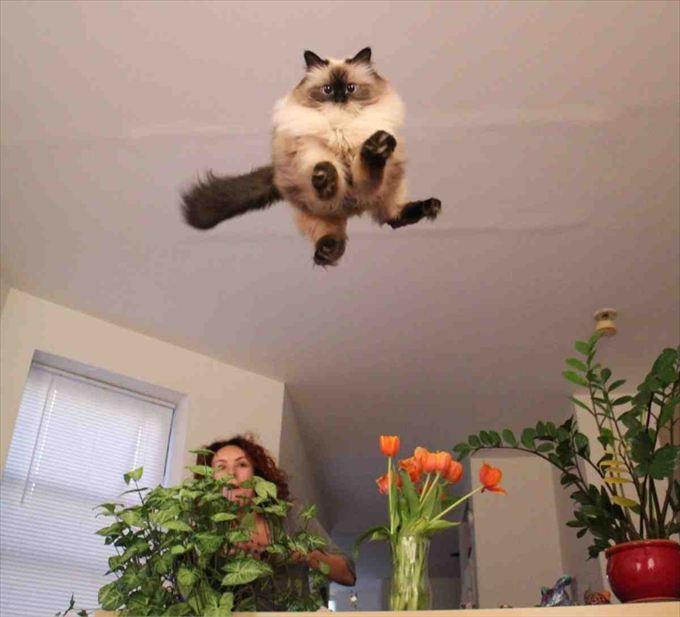 猫おもしろ画像 11