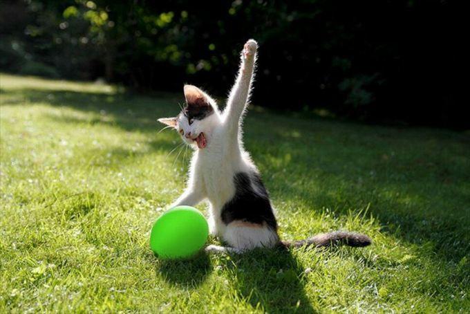 猫おもしろ画像 6