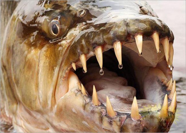 最強に不気味で怖い生物ベスト50選(深海魚ほか危険生物画像まとめ)