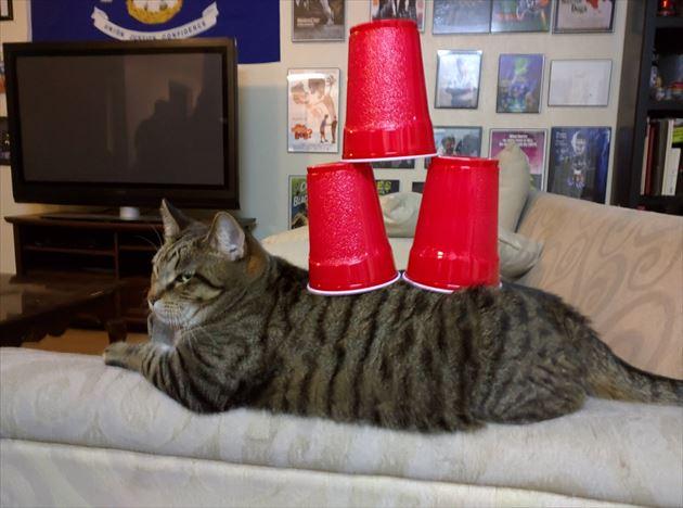 おもしろ猫 3