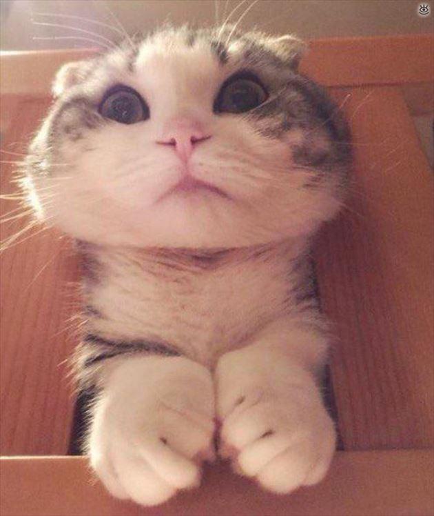 おもしろ猫 37