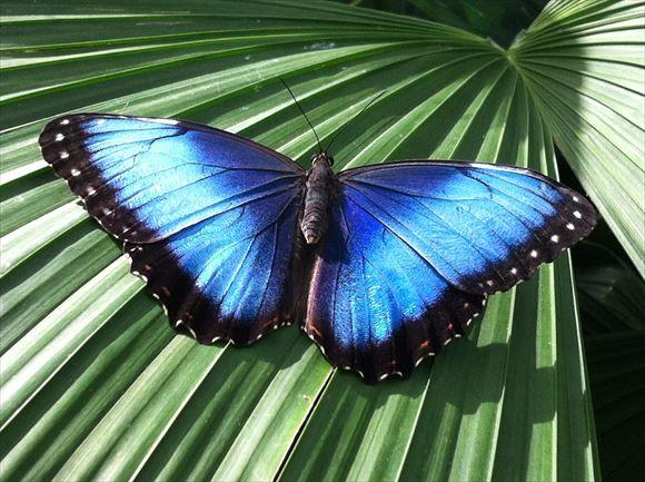 美しい蝶 14.0