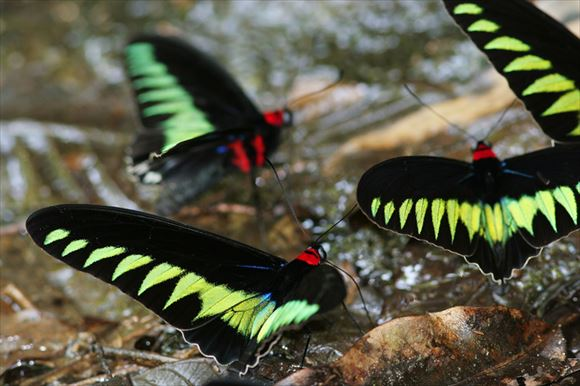 美しい蝶 23.1