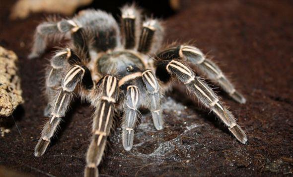 蜘蛛画像 29
