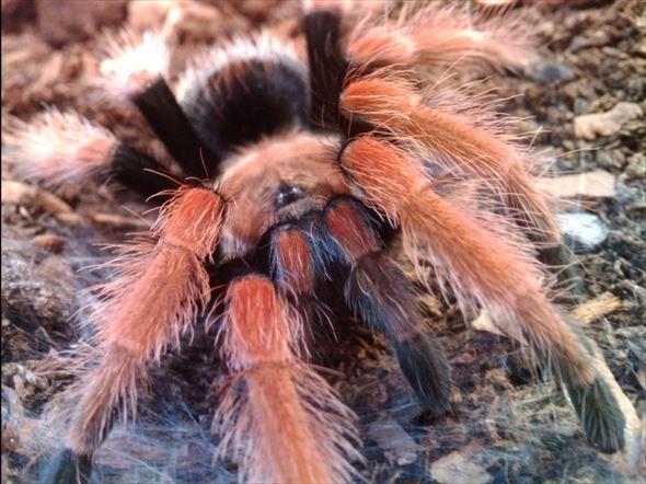 蜘蛛画像 34.0