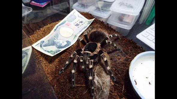 蜘蛛画像 50.0