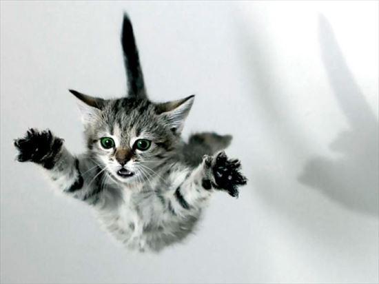 猫雑学 2.0