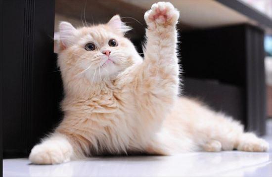 猫雑学 7.0
