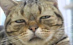 可愛くない猫たち大集合!(画像)