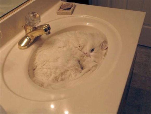 ネコの擬態 15