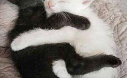 (だいしゅきホールド)抱きしめあう猫の写真集
