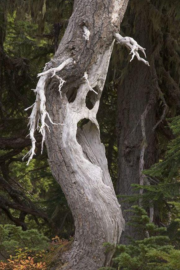珍しい木 38