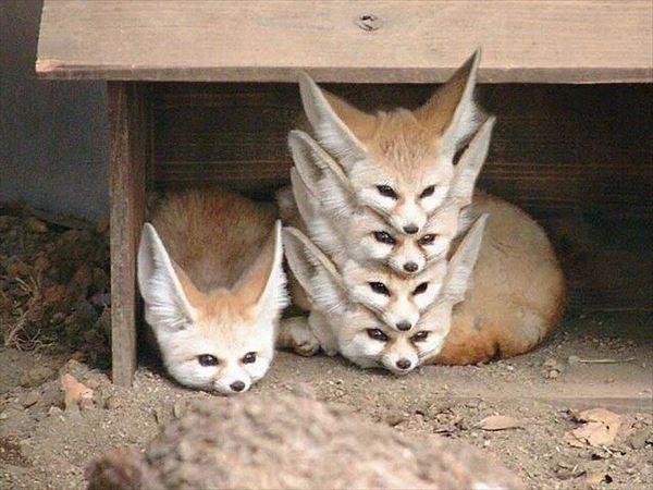 話題の面白可愛い動物写真集(犬猫他56枚画像)