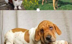 ことなる犬同士で異種交配したミックス犬48種(画像)