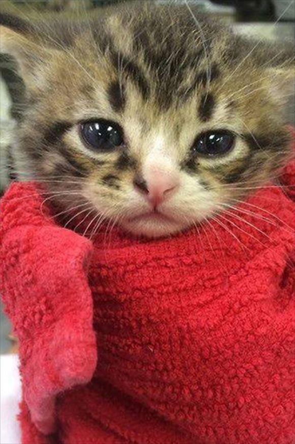 猫が可愛い。おちゃめな猫画像50選