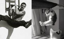 男性モデルがネコだったら。(イケメンと猫画像90選)