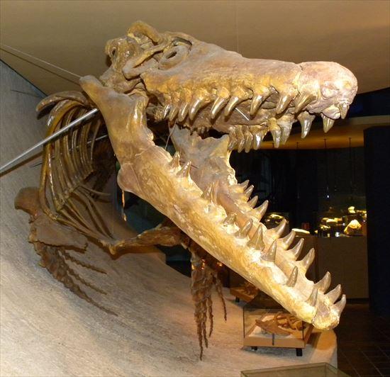 本当にびっくりするほど大きい。世界最大の恐竜