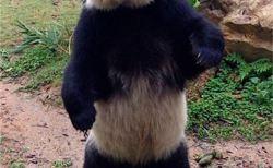 興味深いパンダの雑学