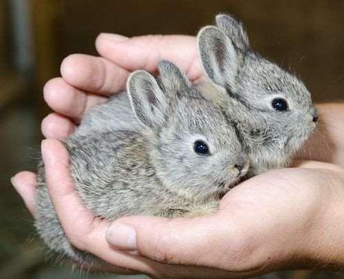 驚くほど小さい!世界最小の動物たち(種別)