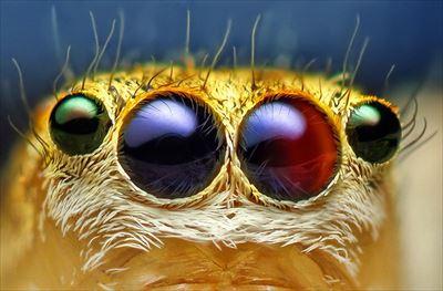 鳥の糞に擬態するクモなど。蜘蛛のすごい雑学34選