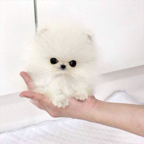 世界の最も高価なペット・動物(価格順14種)