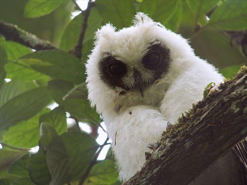 見たことある?日本にいるフクロウの種類・11種