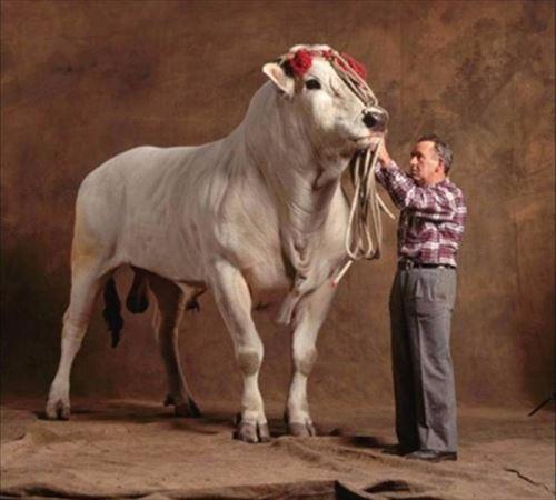 巨大過ぎる。最も大きな草食動物(ランキング10)