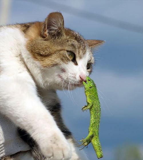ネコの決定的瞬間をとらえたスゴイ画像33枚