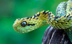 世界の美しいヘビ8匹