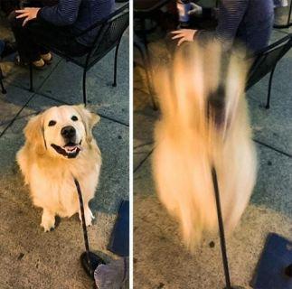 犬が世界最高の動物だと確信させられてしまったとき(写真)