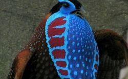 宇宙生物のようなスゴイ見た目の変な鳥たち・9種