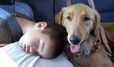 超能力のよう。犬が嗅ぎとる驚くべき匂い7種