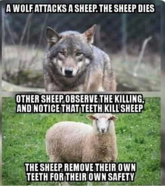 sheep wolf.JPG