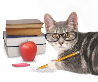 Cat in glasses with books