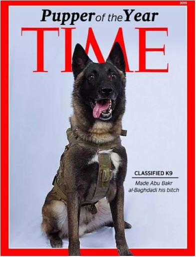 american hero dog time