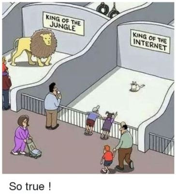 cat king of internet