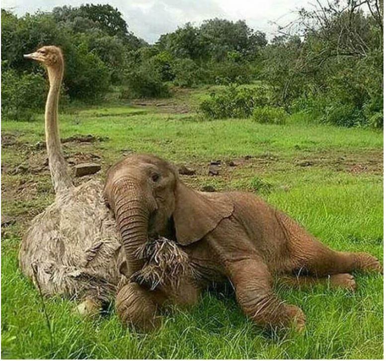 elephant ostrich.JPG