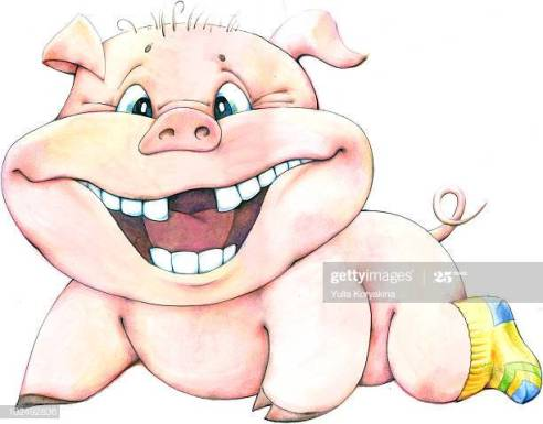 gap tooth pig