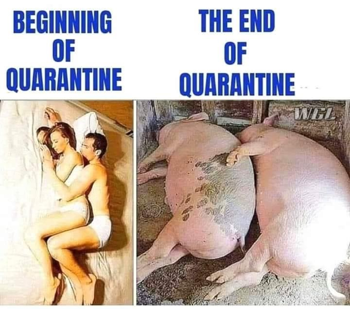 quarantine pigs