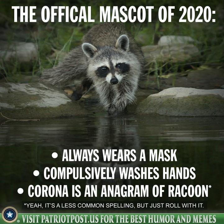 racoon corona