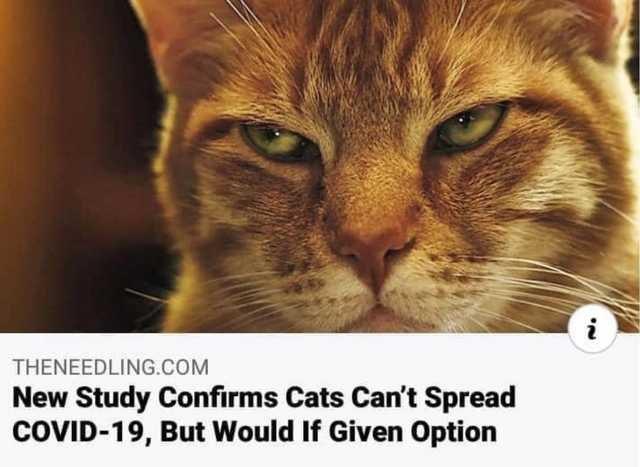 cats corona