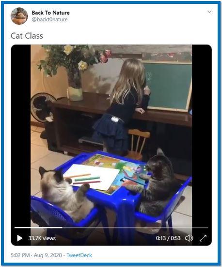 cat class