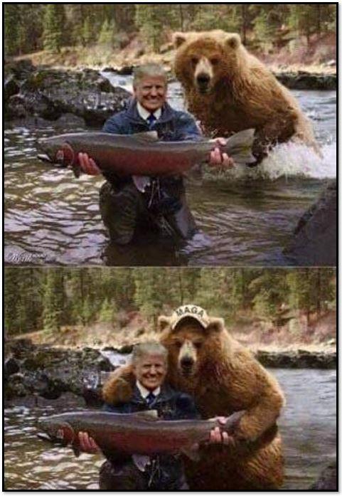 trump bear 4